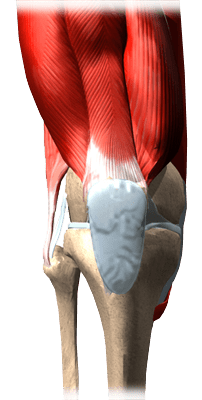Knee-Bursitis